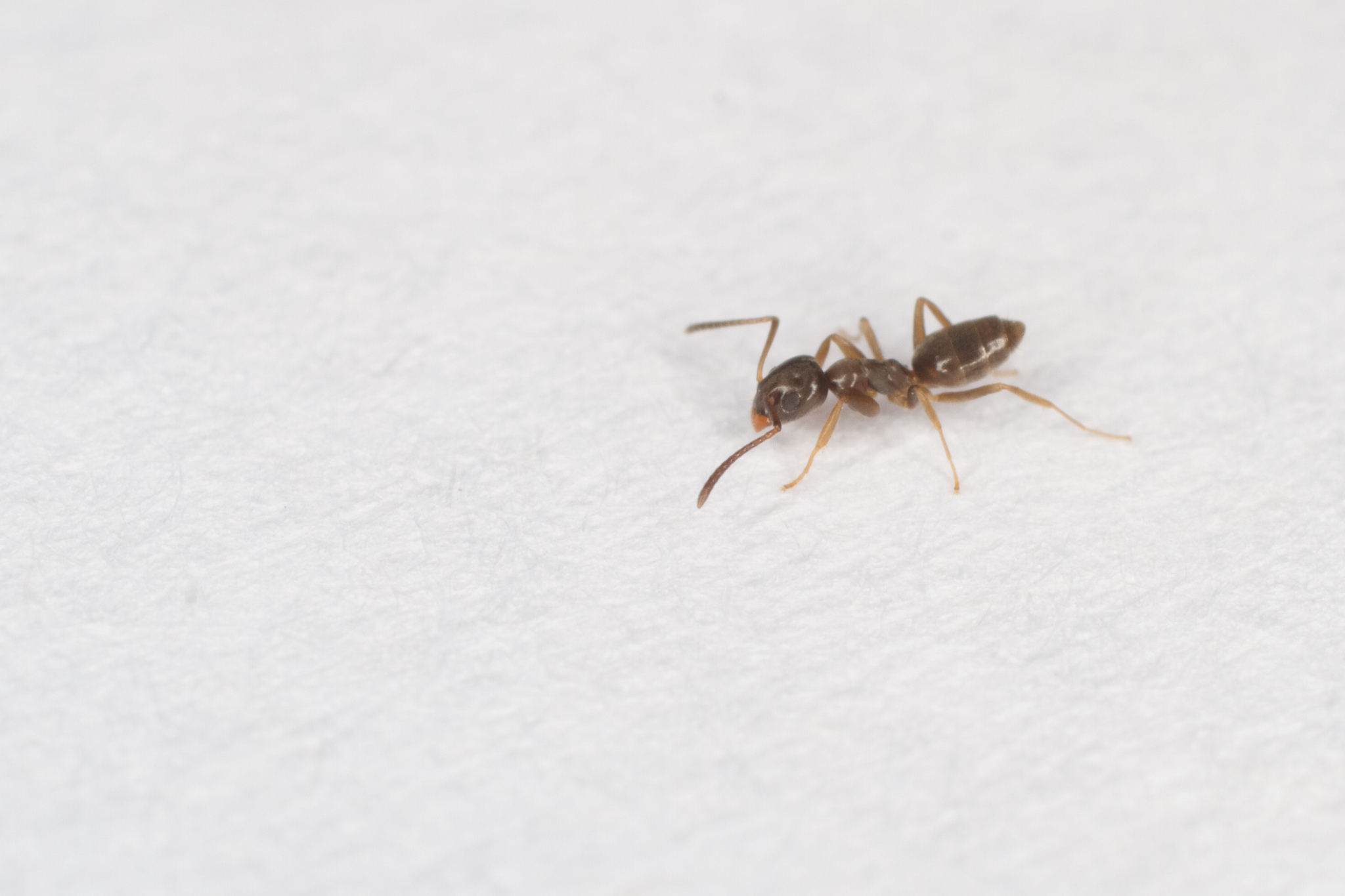 The 7 Most Common Types of Ants Around Your Home and How to Get Rid ...