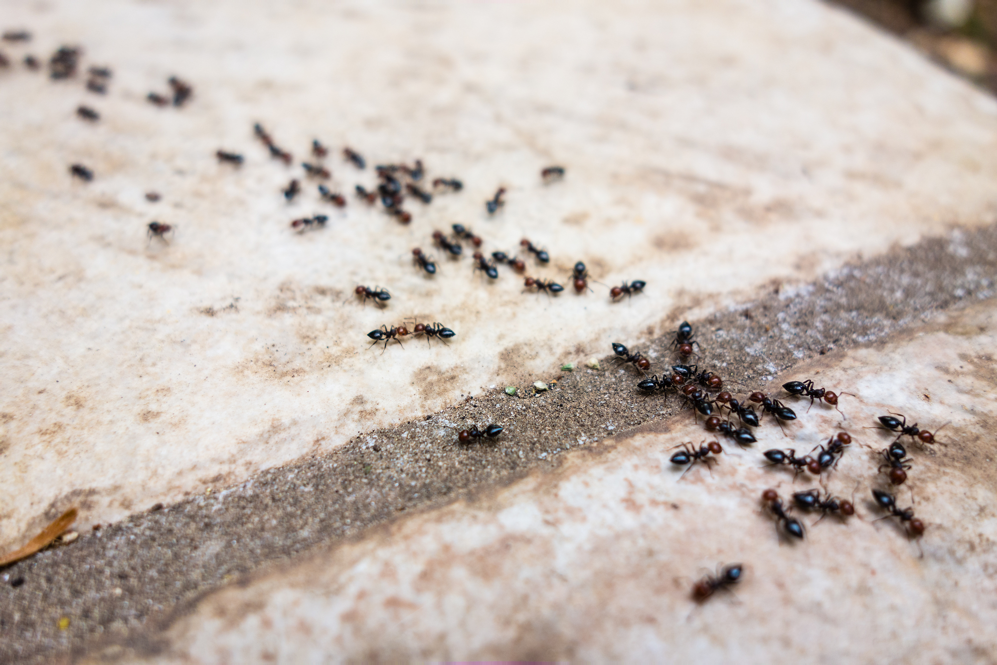the 7 most common types of ants around your home and how to get